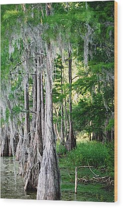 Florida Swamps Wood Print by Peter  McIntosh