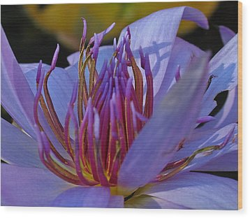 Florida Water Lily Wood Print by Juergen Roth