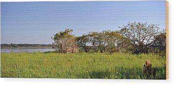Wood Print featuring the photograph Florida Wetlands Panoramic by John Knapko