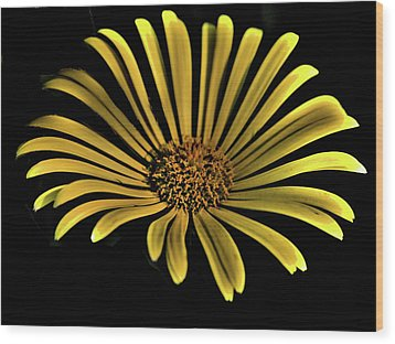 Flower 1 Wood Print by Lawrence Christopher