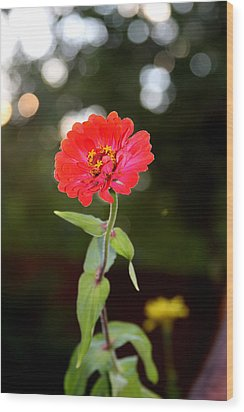 Wood Print featuring the photograph Flower And Hope by Vadim Levin