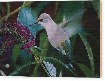 Flower And Hummingbird Wood Print
