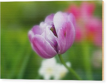 Wood Print featuring the photograph Flower by Anthony Rego