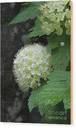 Wood Print featuring the photograph Flower Ball by Rod Wiens