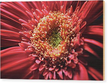 Wood Print featuring the photograph Flower Burst by Sheryl Thomas