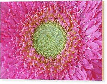 Flower Closeup Wood Print by Deepak Pawar