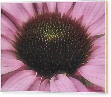 Flower Closeup Wood Print by Mikki Cucuzzo