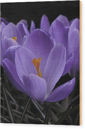 Wood Print featuring the photograph Flower Crocus by Nancy Griswold