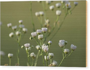 Flower Drops Wood Print by Heidi Poulin