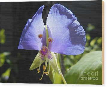 Flower Face Wood Print by Felipe Adan Lerma
