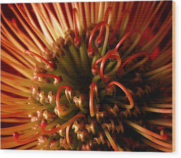 Wood Print featuring the photograph Flower Hawaiian Protea by Nancy Griswold