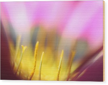 Wood Print featuring the photograph Flower Impressions I by Martina  Rathgens