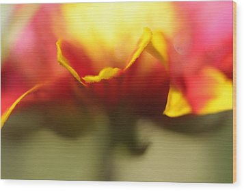 Wood Print featuring the photograph Flower Impressions II by Martina  Rathgens