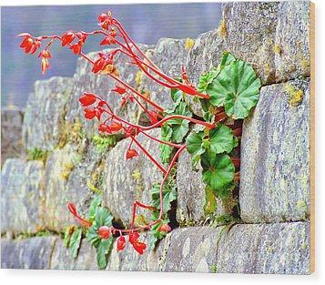 Wood Print featuring the photograph Flower In An Inca Wall by Nigel Fletcher-Jones