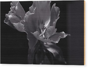 Flower In Monotone Wood Print by Sheryl Thomas