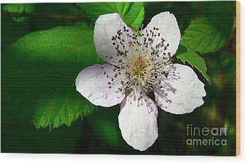 Wood Print featuring the photograph Flower In Shadow by Larry Keahey