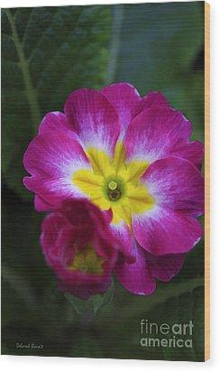 Flower In Spring Wood Print by Deborah Benoit
