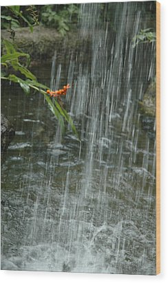 Flower In The Falls Wood Print