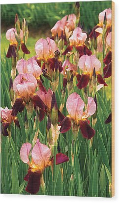 Flower - Iris - Gy Morrison Wood Print by Mike Savad