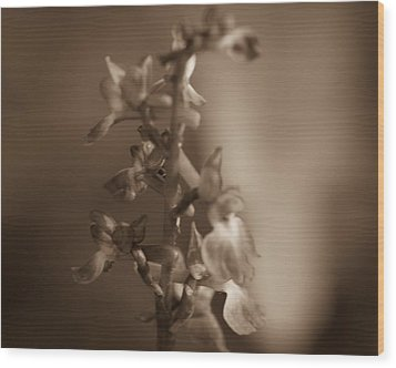 Wood Print featuring the photograph Flower by Keith Elliott