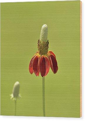 Flower  Wood Print by Nancy Landry