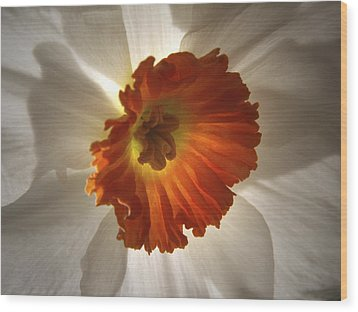 Wood Print featuring the photograph Flower Narcissus by Nancy Griswold