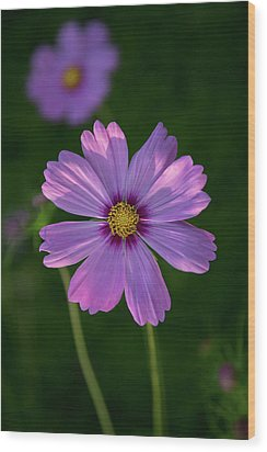 Wood Print featuring the photograph Flower Of Love by Dale Kincaid