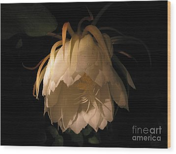 Flower Of The Night 02 Wood Print by Andrea Jean