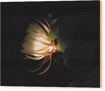 Flower Of The Night 03 Wood Print by Andrea Jean