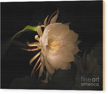 Flower Of The Night 04 Wood Print by Andrea Jean