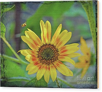 Wood Print featuring the photograph Flower Of The Sun by Kerri Farley