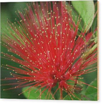 Flower Optics 3 Wood Print by Debbie May