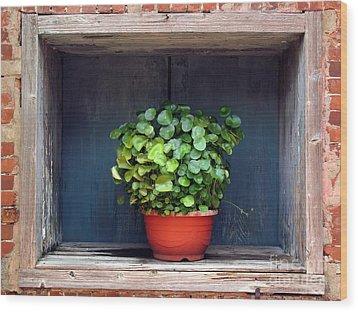 Flower Pot In A Window Wood Print by Yali Shi