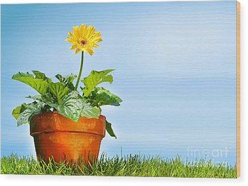 Flower Pot On The Grass Wood Print by Sandra Cunningham