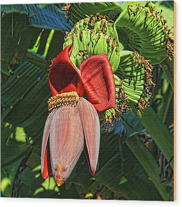 Wood Print featuring the photograph Flower Power by HH Photography of Florida