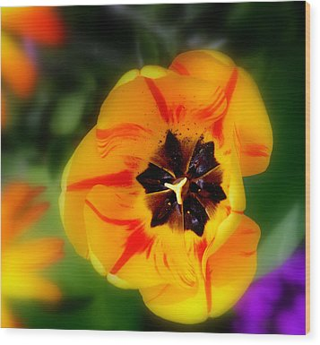 Wood Print featuring the photograph Flower Power by Martina  Rathgens