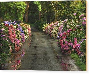 Flower Road Wood Print by Svetlana Sewell
