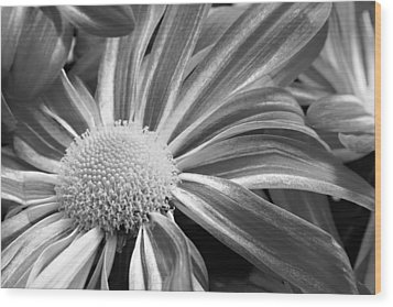 Flower Run Through It Black And White Wood Print by James BO  Insogna