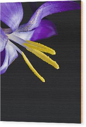 Flower Wood Print by Svetlana Sewell