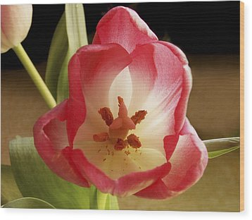 Wood Print featuring the photograph Flower Tulip by Nancy Griswold