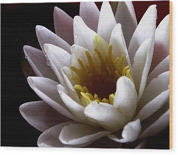 Wood Print featuring the photograph Flower Waterlily by Nancy Griswold