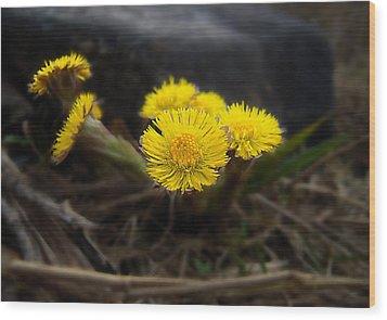 Flower Weed Wood Print by Svetlana Sewell