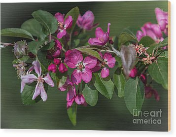 Flowering Crabapple Wood Print