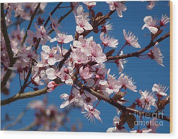 Flowering Of The Plum Tree 5 Wood Print by Jean Bernard Roussilhe