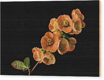 Wood Print featuring the photograph Flowering Quince Orange by Mary Jo Allen
