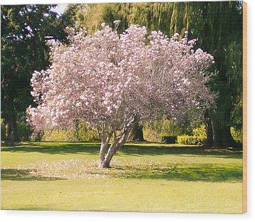 Flowering Tree Wood Print by Mark Barclay