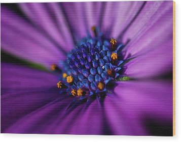 Wood Print featuring the photograph Flowers And Sand by Darren White