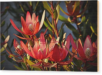 Wood Print featuring the photograph Flowers At Sunset by AJ Schibig