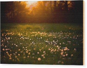 Flowers  Wood Print by Evgeny Vasenev