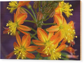 Wood Print featuring the photograph Flowers Of Spring by Stephen Anderson